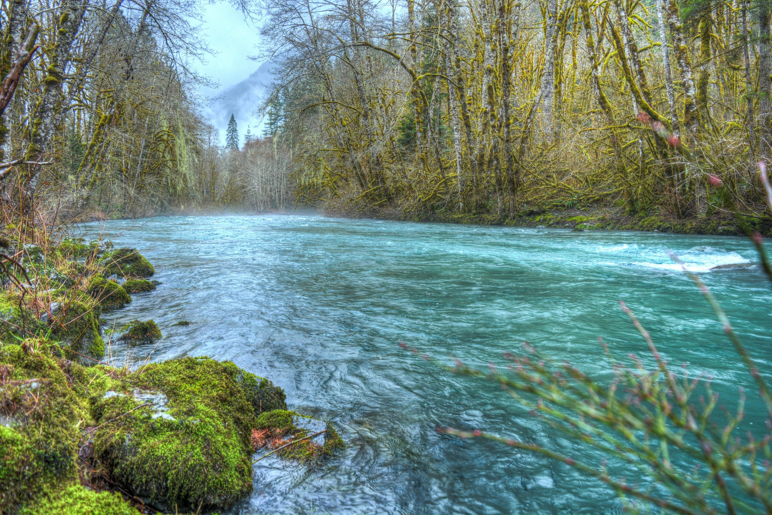 Dosewallips River, Olympic National Forest, WA